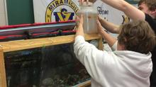 Fish Friends 2015...releasing the eggs